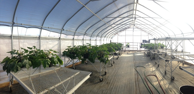 Heated Greenhouse